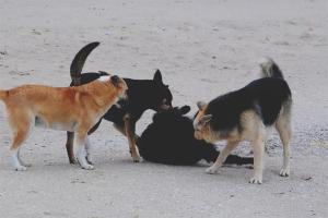 Com desfer-se dels gossos perduts