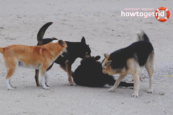 Wie man streunende Hunde loswird