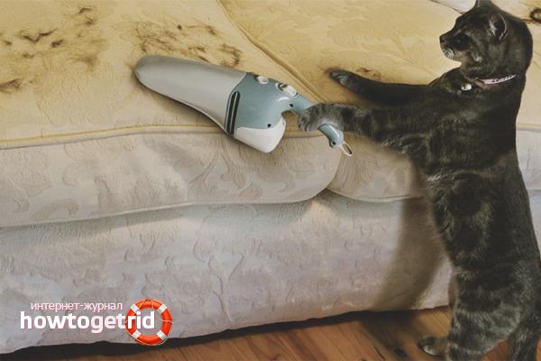Wie man Katzenhaare loswird