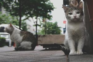 Com desfer-se dels gats i gats
