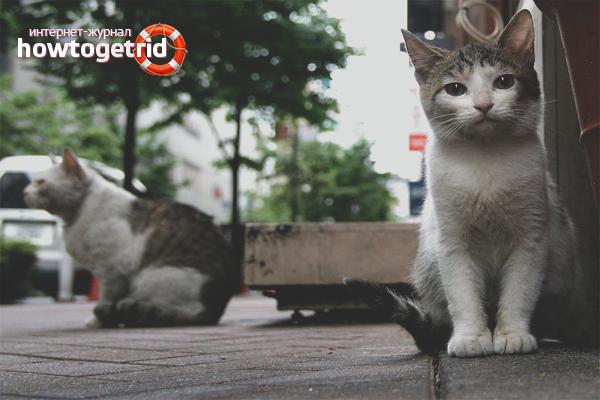 Kedilerden ve kedilerden nasıl kurtulurum