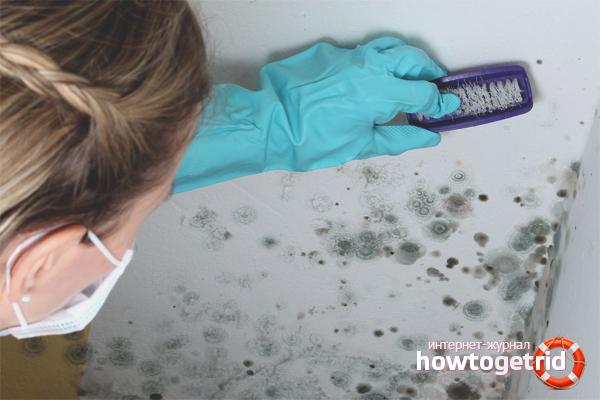 Wie man Pilze an den Wänden in einer Wohnung loswird