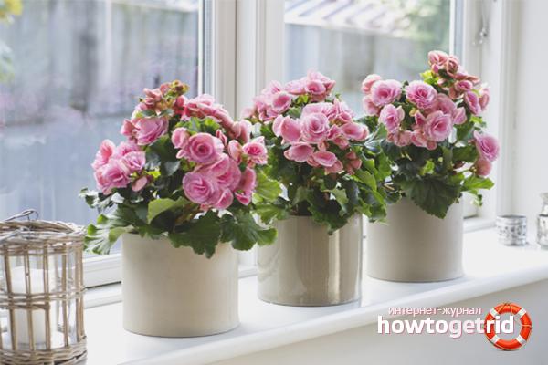 Cara mengatur penyiraman bunga dalaman semasa cuti