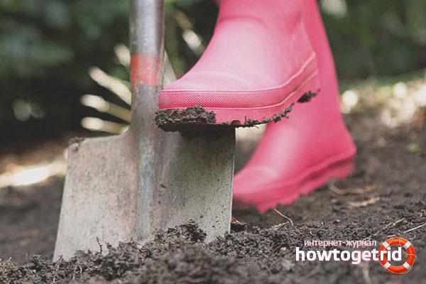 Penyediaan tanah untuk barberry