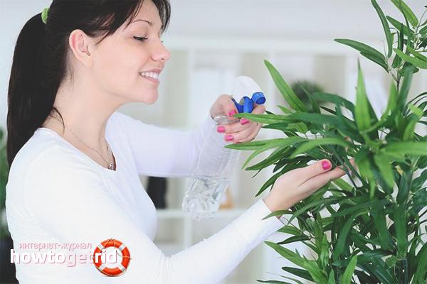 Wie man Blattläuse mit Chemikalien loswird