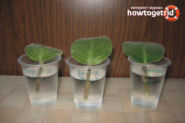Размножаване на теменужки