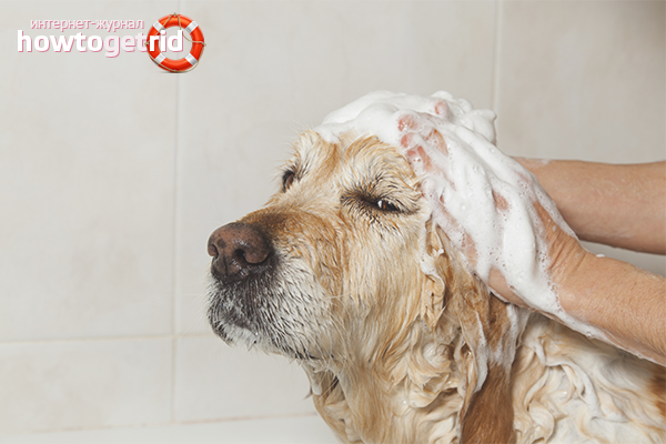 Kā atbrīvoties no suņu smakas suņiem
