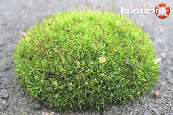 Wie man Moos auf dem Rasen loswird