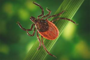 Örümcek akarından nasıl kurtulurum