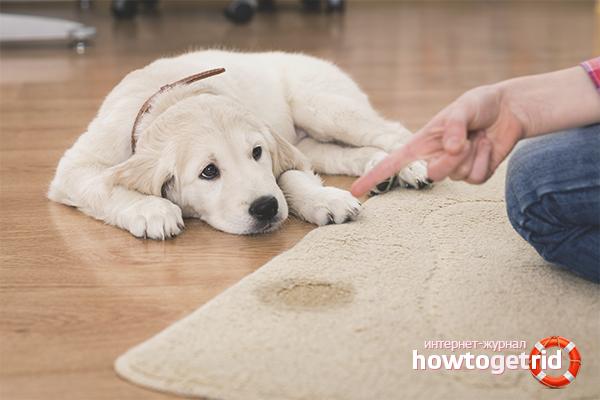 Wie man den Geruch von Hundeurin loswird