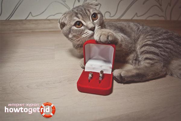 Propunere de căsătorie