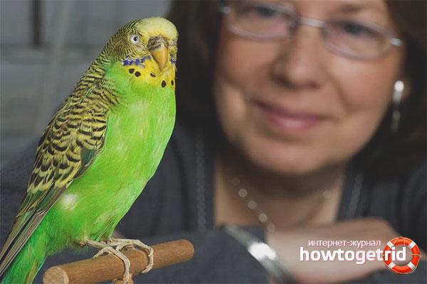 Antrenament de papagali