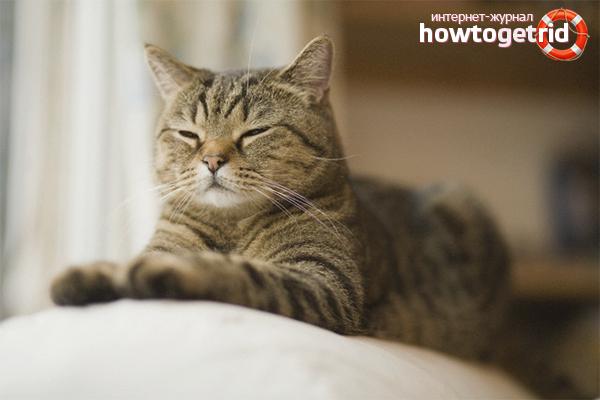 Kā atšķir kaķi, lai atzīmētu teritoriju dzīvoklī