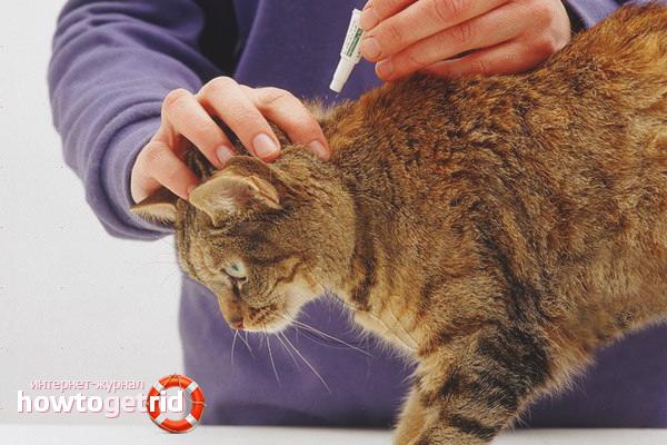 Comment sortir une puce d'un chat