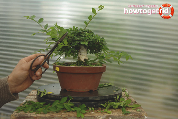 Sådan formes et bonsai-træ