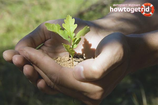 Cara menjaga oak