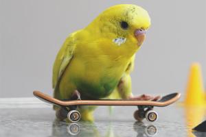 Како превозити папагаја у аутомобилу