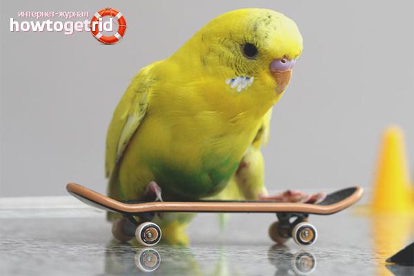 Wie man einen Papagei in einem Auto transportiert