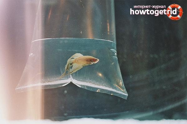 Com transportar els peixos aquaris