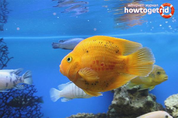 Com cuidar el peix en un aquari