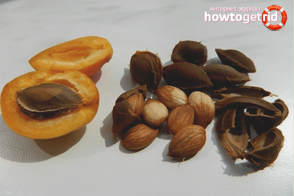 Pengerasan kernel aprikot