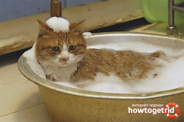 Com rentar un gat