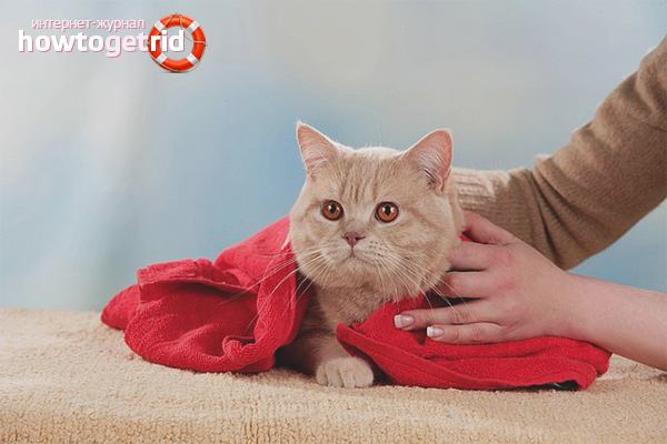 Com assecar un gat després de banyar-se