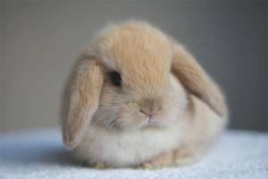 Hvordan man plejer dekorative kaniner