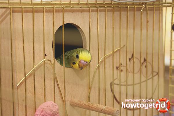 Casa de cuibare pentru papagalii de reproducere