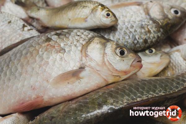 Ефективни начини за размразяване на рибата