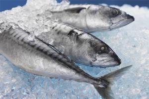 Com descongelar ràpidament un peix