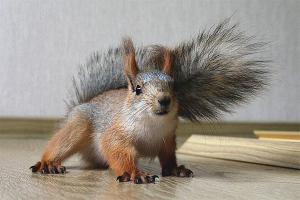 Com cuidar un esquirol