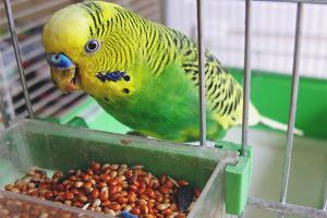 Како нахранити папучицу