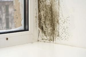 Com desfer-se dels motlles a les finestres de plàstic