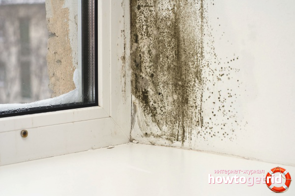 Hur man kan bli av med mögel på plastfönster