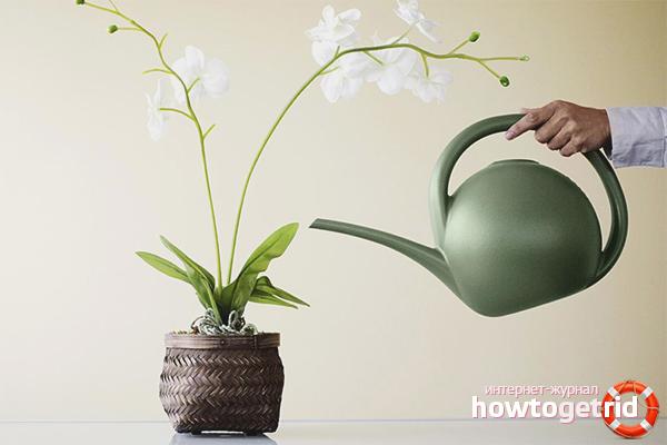 Как да поливаме орхидея