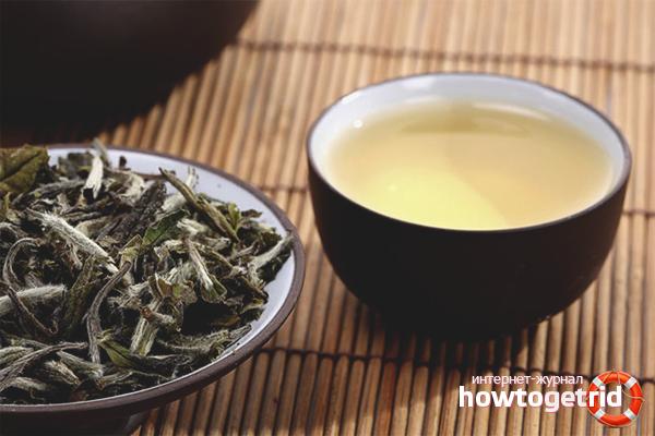 Els avantatges i els perjudicis del te blanc