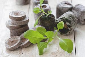 Hur man använder torvpiller för plantor