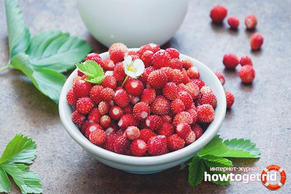 Les avantages et les inconvénients des fraises des bois