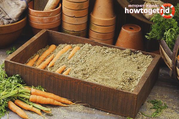 Bảo quản cà rốt trên cát