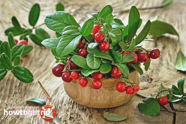 Cum să luați lingonberries cu cistită