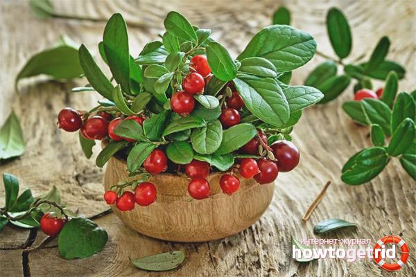 Proprietăți utile și contraindicații ale lingonberry-ului
