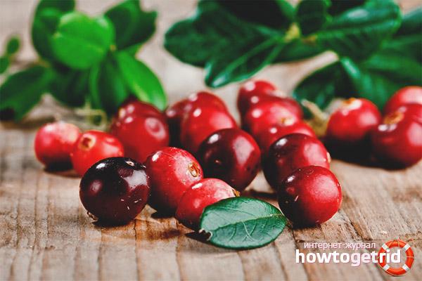 Avantajele lingonberry-urilor pentru gravide