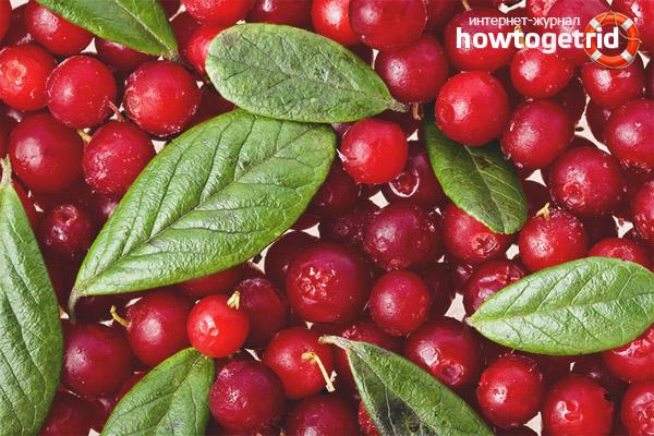 Avantajele lingonberries pentru femei