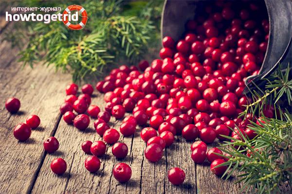 Contraindicații Lingonberry