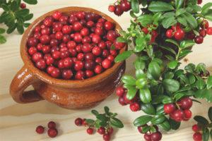 Lingonberry durant l'embaràs