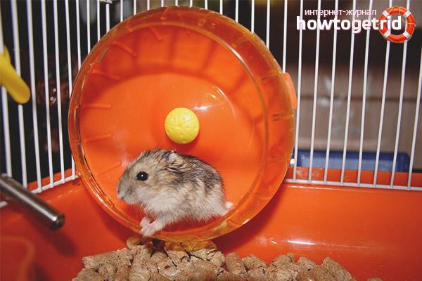 Hamster Wheel and Ball