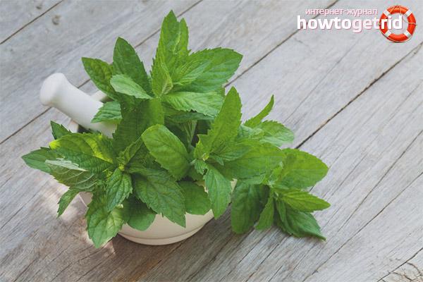 Medicinska egenskaper och kontraindikationer för citronmeliss