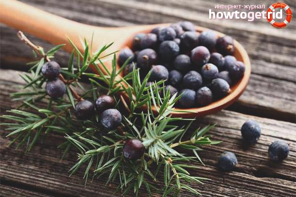 Terapi med naturliga frukter av enbär