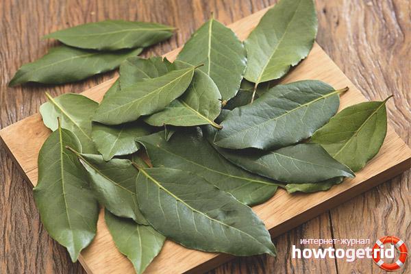 Cara menggunakan daun salam untuk penurunan berat badan